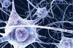 sistemas neuronais
